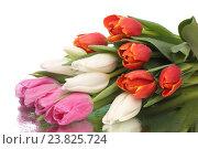 Купить «Букет тюльпанов», фото № 23825724, снято 21 мая 2019 г. (c) Максим Стриганов / Фотобанк Лори