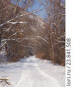 Купить «Лесная дорога в зимний полдень», фото № 23841508, снято 23 декабря 2012 г. (c) Олег Рубик / Фотобанк Лори