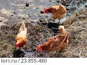 Купить «Agriculture & Food», фото № 23855480, снято 16 июня 2019 г. (c) easy Fotostock / Фотобанк Лори
