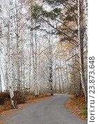 Асфальтированная дорога в осеннем сибирском лесу туманным октябрьским утром. Стоковое фото, фотограф Константин Мезенцев / Фотобанк Лори