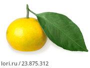 Купить «Один желтый мандарин с зеленым листом», фото № 23875312, снято 20 октября 2016 г. (c) Boroda / Фотобанк Лори