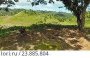 Купить «Филиппинская деревня. Буйволы, отдыхают под деревьями.», видеоролик № 23885804, снято 1 августа 2016 г. (c) Mikhail Davidovich / Фотобанк Лори