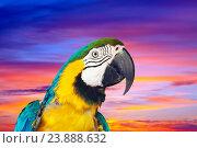 Купить «macaw against sunset sky», фото № 23888632, снято 22 сентября 2019 г. (c) Яков Филимонов / Фотобанк Лори