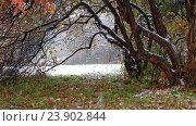 Купить «Hawthorn tree with red leaves under heavy snowfall at late Autumn and early Winter in Siberia», видеоролик № 23902844, снято 11 октября 2016 г. (c) Serg Zastavkin / Фотобанк Лори