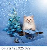 Купить «Сибирский котенок c новогодней елкой, новогодняя тема для открытки», фото № 23925072, снято 10 января 2016 г. (c) ElenArt / Фотобанк Лори