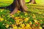 Осенние опавшие листья клена у подножия деревьев на закате - осенний пейзаж, фото № 23925124, снято 9 октября 2016 г. (c) Зезелина Марина / Фотобанк Лори