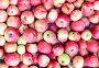 Фон из спелых яблок, фото № 23947332, снято 21 августа 2016 г. (c) Андрей Радченко / Фотобанк Лори