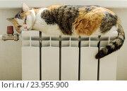 Купить «Кошка греется на радиаторе», фото № 23955900, снято 11 ноября 2012 г. (c) Natalya Sidorova / Фотобанк Лори