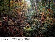 Густой осенний лес в октябре. Стоковое фото, фотограф Павел / Фотобанк Лори