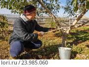 Купить «Мужчина белит деревья», фото № 23985060, снято 21 октября 2016 г. (c) Акиньшин Владимир / Фотобанк Лори