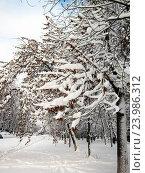 Купить «Деревья в снегу», фото № 23986312, снято 9 декабря 2013 г. (c) Светлана Кириллова / Фотобанк Лори