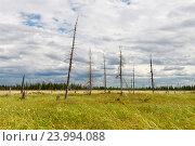 Пейзаж с цветущей пушицей. Стоковое фото, фотограф Владимир Ковальчук / Фотобанк Лори