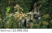 Купить «Старый склеп среди растительности», видеоролик № 23998392, снято 24 сентября 2016 г. (c) Швец Анастасия / Фотобанк Лори