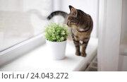 Купить «cat on window sill at home», видеоролик № 24043272, снято 19 октября 2016 г. (c) Syda Productions / Фотобанк Лори