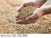 Купить «male farmers hands holding malt or cereal grains», фото № 24132480, снято 6 сентября 2016 г. (c) Syda Productions / Фотобанк Лори