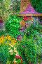 Купить «Цветник на небольшом дачном участке. Бердск, Новосибирская область, Сибирь, Россия», фото № 24145036, снято 10 июля 2016 г. (c) Евгений Мухортов / Фотобанк Лори