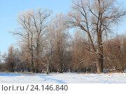 Зимнее утро, эксклюзивное фото № 24146840, снято 15 марта 2016 г. (c) Вероника / Фотобанк Лори