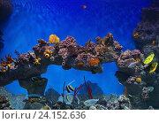 Купить «tropical fishes in sea water aquarium», фото № 24152636, снято 2 ноября 2016 г. (c) Майя Крученкова / Фотобанк Лори