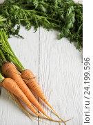 Купить «Freshly grown carrots», фото № 24199596, снято 17 июля 2016 г. (c) Jan Jack Russo Media / Фотобанк Лори