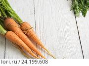 Купить «Freshly grown carrots», фото № 24199608, снято 17 июля 2016 г. (c) Jan Jack Russo Media / Фотобанк Лори