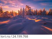 Купить «Зимний пейзаж на закате в лесу», фото № 24199768, снято 22 ноября 2015 г. (c) Оксана Владимировна Грачева / Фотобанк Лори