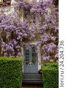 Цветы глицинии и дверь увитая цветами в парке. Стоковое фото, фотограф Наталья Корзина / Фотобанк Лори