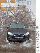 Купить «Последствия ледяного дождя. Дерево под тяжестью ледяной корки упало на заледенелый легковой автомобиль. Митино», фото № 24205104, снято 11 ноября 2016 г. (c) Валерия Попова / Фотобанк Лори