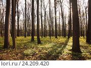 Лес в парке. Стоковое фото, фотограф Андрей Гривцов / Фотобанк Лори
