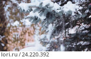 Купить «hand shaking snow from fir branch in winter forest», видеоролик № 24220392, снято 11 ноября 2016 г. (c) Syda Productions / Фотобанк Лори