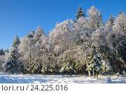 Купить «Пейзаж с заснеженным лесом в солнечный день», фото № 24225016, снято 15 ноября 2016 г. (c) Елена Коромыслова / Фотобанк Лори