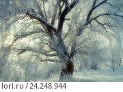 Купить «Зимний пейзаж в винтажных тонах - красивое зимнее дерево, покрытое инеем, в зимнем лесу в мягком солнечном свете», фото № 24248944, снято 21 августа 2018 г. (c) Зезелина Марина / Фотобанк Лори