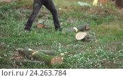 Купить «Мужчины колют дрова», видеоролик № 24263784, снято 9 июля 2020 г. (c) Vitalii Popov / Фотобанк Лори