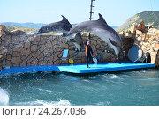 Купить «Анапский Утришский дельфинарий. Шоу морских млекопитающих», фото № 24267036, снято 6 июня 2015 г. (c) Игорь Архипов / Фотобанк Лори