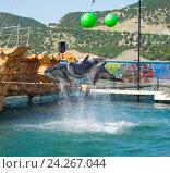 Купить «Анапский Утришский дельфинарий. Шоу морских млекопитающих», фото № 24267044, снято 6 июня 2015 г. (c) Игорь Архипов / Фотобанк Лори