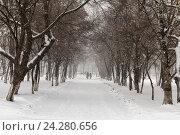 Тротуар в зимнем парке. Стоковое фото, фотограф Владимир Иванов / Фотобанк Лори