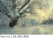 Купить «Winter landscape with frosty winter tree in the sunrise light -winter wonderland scene», фото № 24283456, снято 17 октября 2018 г. (c) Зезелина Марина / Фотобанк Лори