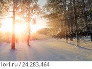 Купить «Winter landscape -winter forest nature under bright evening sunlight with frosty trees», фото № 24283464, снято 27 ноября 2010 г. (c) Зезелина Марина / Фотобанк Лори