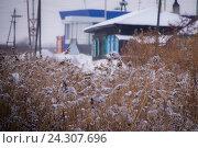 Купить «Заснеженный болотный камыш», фото № 24307696, снято 11 ноября 2016 г. (c) Павел Сапожников / Фотобанк Лори