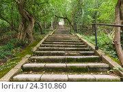 Купить «Старая замшелая лестница в южном парке», фото № 24310860, снято 7 июня 2016 г. (c) Наталья Гармашева / Фотобанк Лори