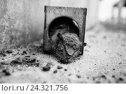 Купить «Dead rat in rat trap,», фото № 24321756, снято 18 августа 2018 г. (c) mauritius images / Фотобанк Лори