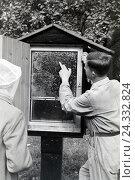 Купить «Ein Imker zeigt eine Wabe mit einem Bienenvolk, Deutschland 1930er Jahre. A bee keeper presenting a honeycomb with a bee population, Germany 1930s», фото № 24332824, снято 17 августа 2018 г. (c) mauritius images / Фотобанк Лори