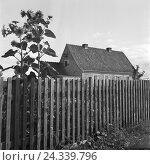 Купить «Haus mit Sonnenblumen in Nikolaiken in Masuren in Ostpreußen, Deutschland 1930er Jahre. House with sunflowers in the garden at Nikolaiken in Masuria in East Prussia, Germany 1930s.», фото № 24339796, снято 19 июля 2018 г. (c) mauritius images / Фотобанк Лори