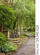 Купить «Cemetery, gravestone, memory, trees», фото № 24340624, снято 20 августа 2018 г. (c) mauritius images / Фотобанк Лори
