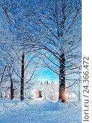 Купить «Winter landscape night scene - deserted snowy walkway with snowfall and snowy trees in the night», фото № 24366472, снято 22 сентября 2018 г. (c) Зезелина Марина / Фотобанк Лори