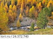 Купить «Alpine Landscape with Larch Trees and Creek in Autumn, Julierpass, Grisons, Switzerland», фото № 24372740, снято 19 августа 2018 г. (c) mauritius images / Фотобанк Лори