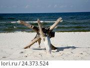 Купить «Poland, West Pomeranian, Wolin, Miedzyzdroje, German Misdroy», фото № 24373524, снято 21 июля 2019 г. (c) mauritius images / Фотобанк Лори