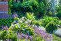 Цветущие Хосты ( Hosta ) на клумбе дачного участка, фото № 24392304, снято 10 июля 2016 г. (c) Евгений Мухортов / Фотобанк Лори