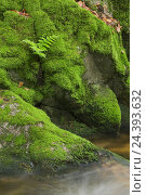 Купить «mossy stones in the coarse brook, Gerold villagesau, Black Forest, Baden-Baden, Baden-Wurttemberg, Germany», фото № 24393632, снято 22 июля 2018 г. (c) mauritius images / Фотобанк Лори