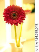 Купить «Flower, vase, red, gerbera,», фото № 24398048, снято 16 августа 2018 г. (c) mauritius images / Фотобанк Лори