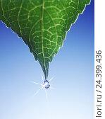 Купить «Leaves, detail, drop water, light reflexion, Still life, plant, nature, veins, leaf veins, chlorophyll, chlorophyll, botany, water, drop, rope, rain, raindrop, dewdrop, icon, freshness», фото № 24399436, снято 19 декабря 2002 г. (c) mauritius images / Фотобанк Лори